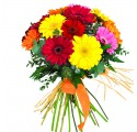 Ramo 12 Gerberas Multicolor